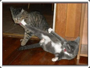 funny-pictures-cat-does-a-good-high-kick1
