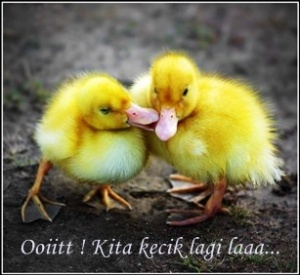 love-picture-ducks-lab2112