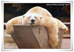 tired_bear